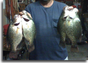 Scott Robinson with some Illinois ice fishing crappie